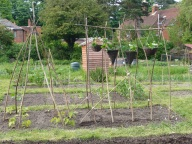 strawberry baskets on bean poles