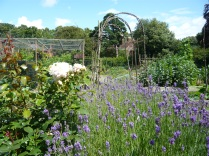 lavender and the rustic arch