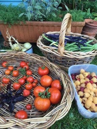 """Tomatoes """"Crimson Blush"""" & """"Primabella"""""""